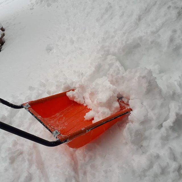 片付けたのにまた出動‥??雪かきでひと汗かきました‥***今日は埼玉などあちこちで降ってるようですね‥湿った雪なので車のタイヤも滑って危なかったです‥??まだ普通タイヤに変えられないな〜*そしてなぜがいつも指が写ってしまう‥‥私だけ***#アウトドア#景色山#風景#発見#散歩#森#森林#山#自然#天然#温泉#温泉旅行 #旅行#素朴#パワースポット#遊ぶ#シンプル#ナチュラル#尾瀬#尾瀬国立公園#空#青空#太陽#朝日#春の訪れ#春の気配#芽吹き#ネイチャー#登山#山登り