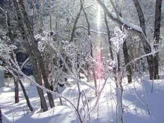 冬の?️雪景色も最高だけど、これから沢山の植物の新芽の出はじめるこの時期は、気分がワクワクしてきます‥‥♪***#アウトドア#景色山#風景#発見#散歩#森#森林#山#自然#天然#温泉#温泉旅行 #旅行#素朴#パワースポット#遊ぶ#シンプル#ナチュラル#尾瀬#尾瀬国立公園#空#青空#太陽#朝日#春の訪れ#春の気配#芽吹き#ネイチャー#登山#山登り
