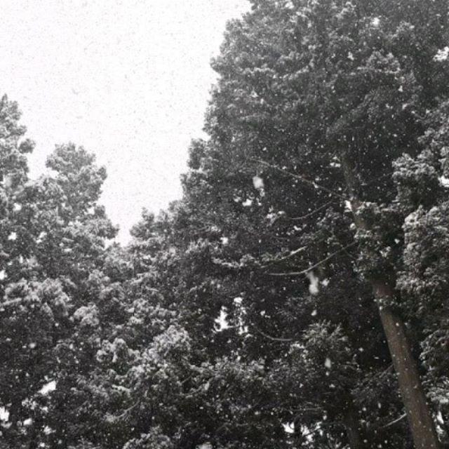 まだ降るんか〜〜い今日も結構な降りっぷりでした?春が遠い‥***前橋に用事があり出かけたら桜がいい感じでしたが‥でも撮り方に問題が‥??***#アウトドア#景色山#風景#発見#散歩#森#森林#山#自然#天然#温泉#温泉旅行 #旅行#素朴#パワースポット#遊ぶ#シンプル#ナチュラル#尾瀬#尾瀬国立公園#空#青空#太陽#朝日#春の訪れ#春の気配#芽吹き#ネイチャー#登山#山登り