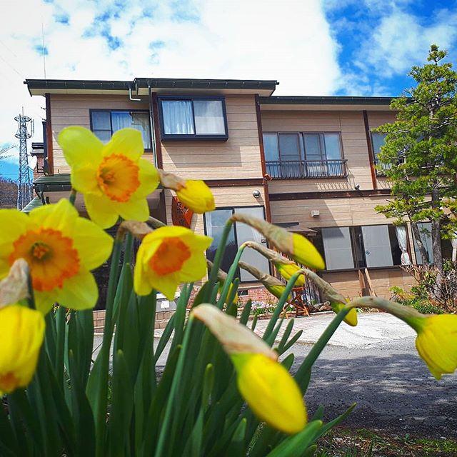 宿の庭の花もやっと少しづつ咲き始めて来ました???*桜はまだですが‥‥*春はやっぱりいいですね〜(*˘︶˘*).。.:*♡*お店から少し花を買ってきて鉢に植えてみました‥‥**#アウトドア#景色山#風景#発見#散歩#森#森林#山#自然#天然#温泉#温泉旅行 #旅行#素朴#パワースポット#遊ぶ#シンプル#ナチュラル#尾瀬#尾瀬国立公園#空#青空#太陽#朝日#春の訪れ#春の気配#芽吹き#ネイチャー#登山#山登り